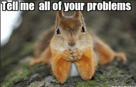 Squirrels chew on wires
